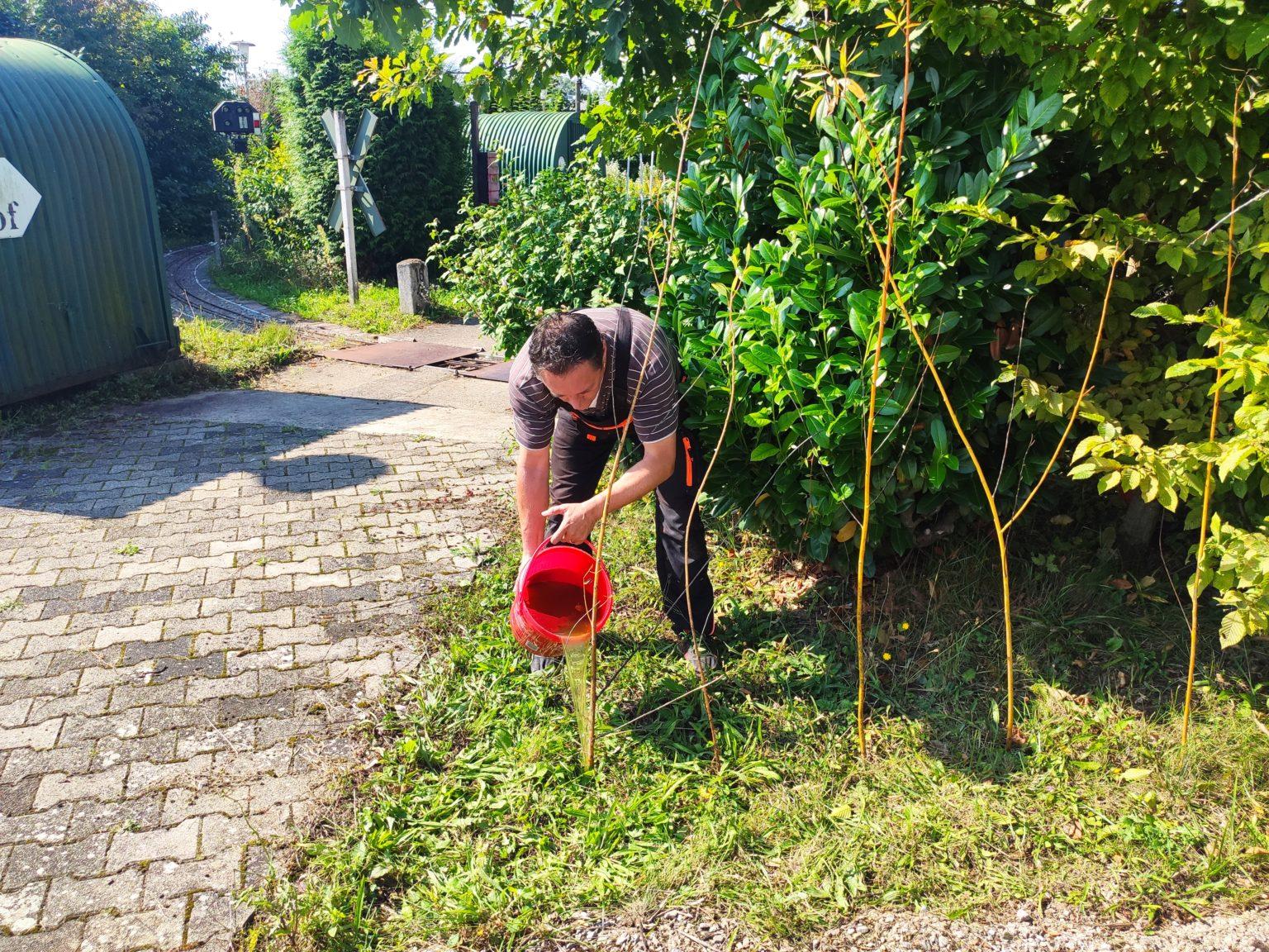 Die gepflanzten Weiden werden gegossen